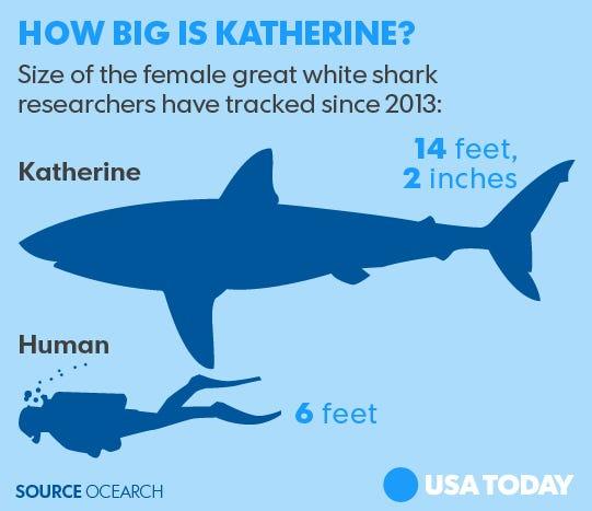 Great White Shark Facts Like Habitat Size amp Diet  Shark