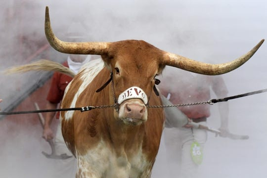 Sep 15, 2018; Austin, TX, USA; Texas Longhorns mascot Bevo XV during the game against the Southern California Trojans at Darrell K Royal-Texas Memorial Stadium. Mandatory Credit: Kirby Lee-USA TODAY Sports
