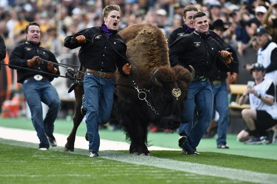 Oct 27, 2018; Boulder, CO, USA; The Colorado Buffaloes mascot runs off Folsom Field in the second half against the Oregon State Beavers. Mandatory Credit: Ron Chenoy-USA TODAY Sports