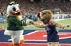 Oct 27, 2018; Tucson, AZ, USA; The Oregon Duck and Arizona Wildcats mascot Wilma the Wildcat dance during the first half at Arizona Stadium. Mandatory Credit: Casey Sapio-USA TODAY Sports