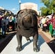 Oct 27, 2018; Starkville, MS, USA; The Bully statue sits in wait for the arrival of the Mississippi State Bulldogs before the game with the Texas A&M Aggies at Davis Wade Stadium. Mandatory Credit: Vasha Hunt-USA TODAY Sports